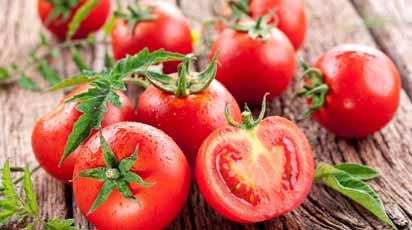 Что делать, если томат вытягивается