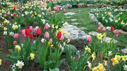 Что посадить с нарциссами и тюльпанами. Создаём удачные композиции