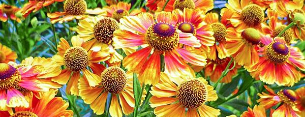 10 цветочных многолетников, которые легко вырастить из семян