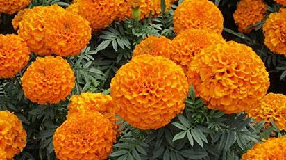 7 лучших цветов для засушливого сада