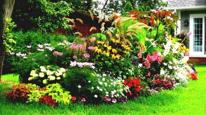 Что посадить возле стен дома: декор неудобных и проблемных участков