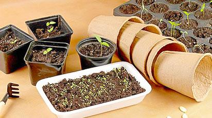 Как отбирать семена по-новому