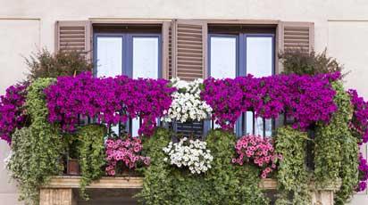 Как правильно ухаживать за растениями на балконе