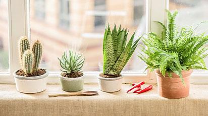 Как ухаживать за комнатными растениями зимой: советы эксперта
