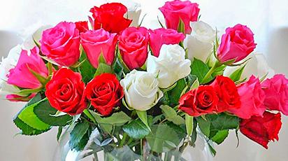 Как вырастить розу из черенков от букета и получить роскошно цветущий куст