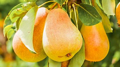 Какие плодовые деревья и кустарники лучше сажать осенью