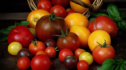 Битва томатов, или Какой сорт помидоров выбрать для выращивания