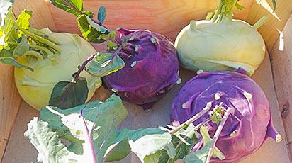 Капуста кольраби – особенности выращивания и правила хранения