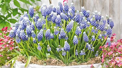 Красивый сад без лишних забот: выбираем самые неприхотливые цветы