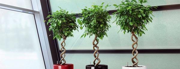 Необычные комнатные растения, которые можно вырастить дома