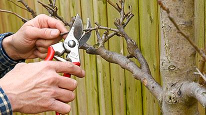 Обрезка деревьев и кустарников – разбор распространенных ошибок