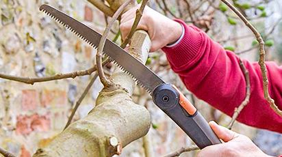 10 основных правил обрезки плодовых деревьев осенью