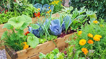 Огород для чайников: 10 советов начинающим садоводам