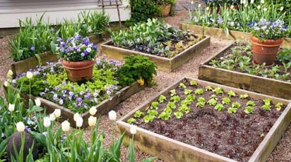 Огородные клумбы: идеи для красивого оформления грядок