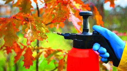 Осенняя подкормка сада: удобрения комплексные, органические, известковые