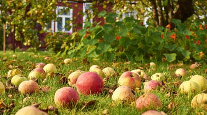 Уход за плодовым садом после сбора урожая. Топ-6 советов