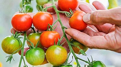 Сроки посева овощных культур на рассаду в разных областях Казахстана