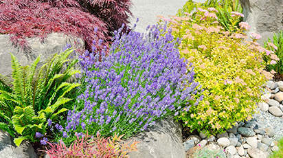 ТОП-7 растений, которые помогут отпугнуть слизней и улиток с грядки