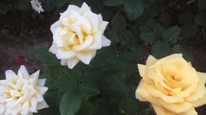 В гостях у покупателя: цветочные поляны Сагдат Еримбетовой