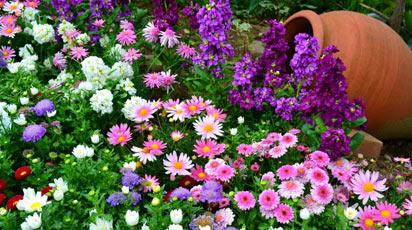 Виды цветников и особенности их составления