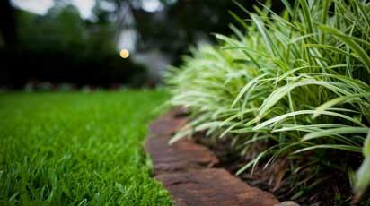 Виды газонов: для пользы, красоты и спорта