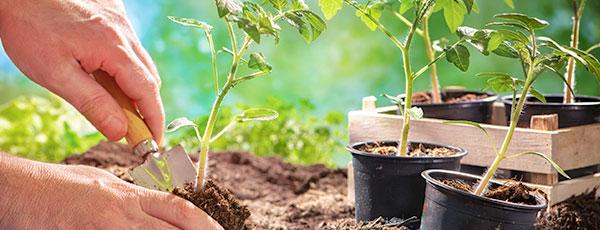 Дачные работы в июне – важные дела в саду, на огороде и в цветнике