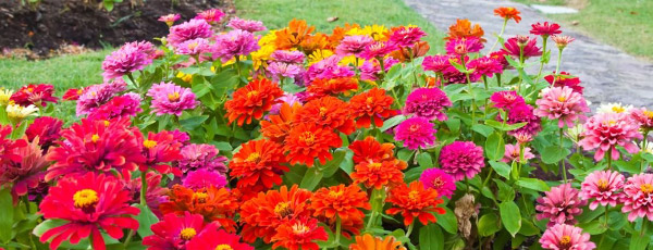 Какие цветы цветут все лето – ТОП-10 от «Беккер»