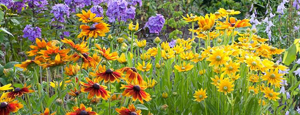 Какие цветы посадить в августе