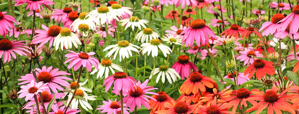 Календарь рассады на март – какие цветы пора сажать уже сейчас?