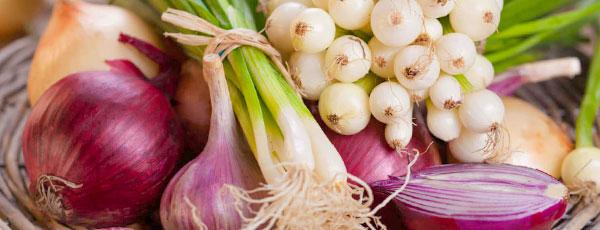 Лук-севок – тонкости выращивания и секреты высокого урожая