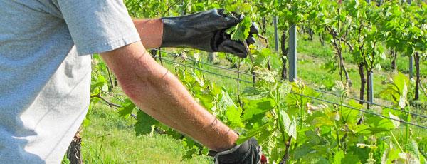 Обработка сада весной: меры борьбы с болезнями и вредителями