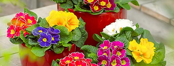 Рассада в феврале: какие цветы и овощи нужно сажать уже сейчас