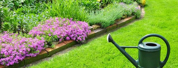 Уход за газоном летом — простые правила