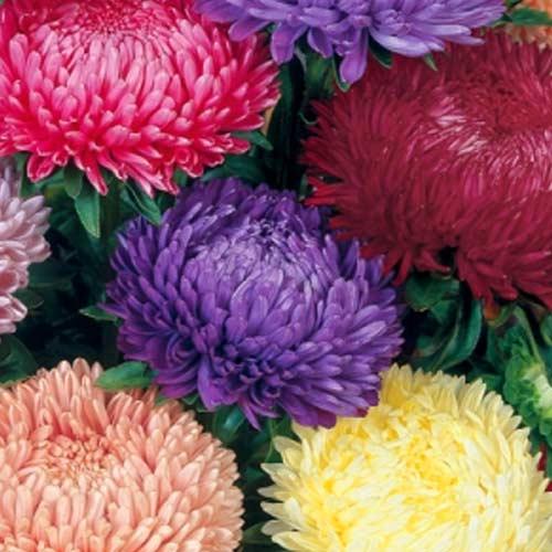 Астра Тауэр Розовый сон, смесь изображение 1 артикул 65796