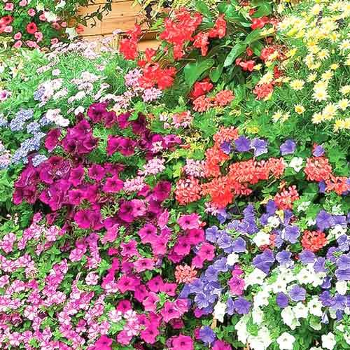 Балконная смесь, смесь окрасок  изображение 1 артикул 65804