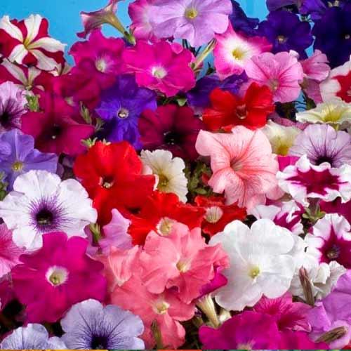 Декоративная смесь Кудряшка, смесь окрасок изображение 1 артикул 66065