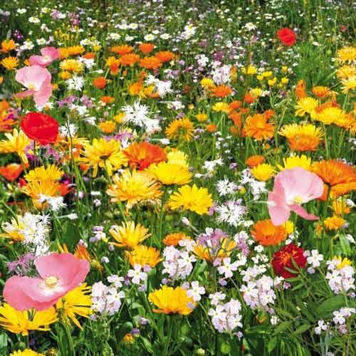 Газон цветущий Душистый луг, смесь окрасок изображение 1 артикул 69865