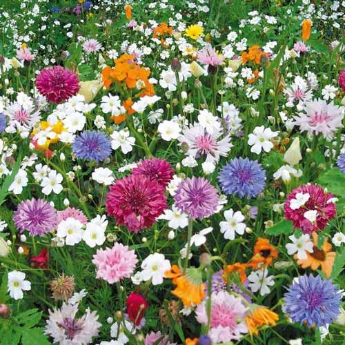 Газон цветущий Эко-Магистраль, смесь окрасок изображение 1 артикул 69872