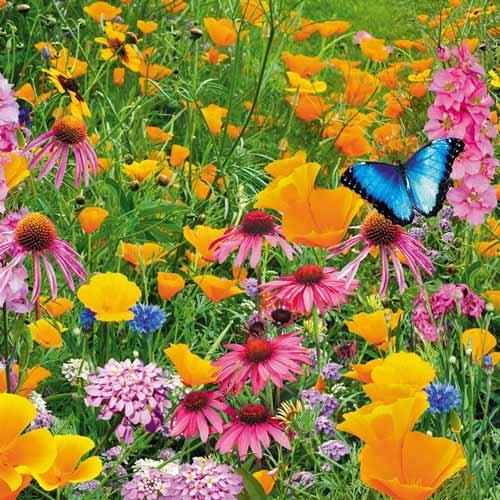 Газон цветущий Рай для бабочек, смесь окрасок изображение 1 артикул 69869