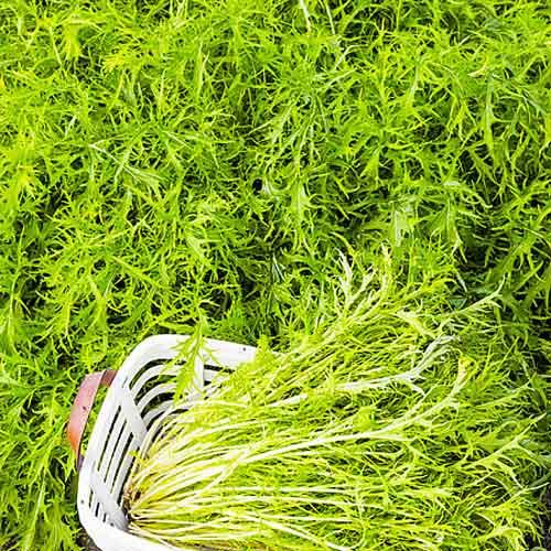 Капуста японская Мизуна, семена изображение 1 артикул 65726
