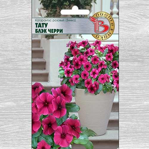 Катарантус розовый (Винка) Тату Блэк Черри изображение 1 артикул 74831