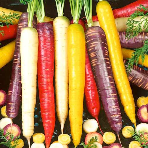 Морковь Чаровница радужная изображение 1 артикул 71624