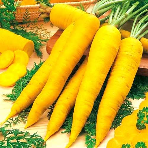 Морковь Карамель желтая изображение 1 артикул 65025