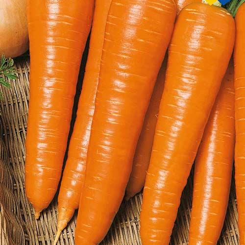 Морковь Мармелад оранжевый изображение 1 артикул 65032