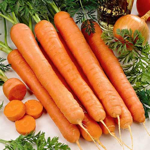 Морковь Русский гигант изображение 1 артикул 65212