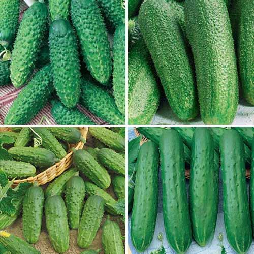 Набор гибридов огурца для засолки, смесь семян изображение 1 артикул 74189