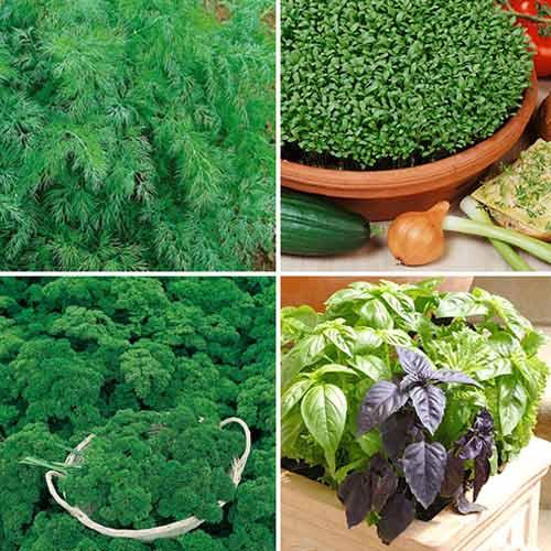 Набор зелени Ароматный Беспредел, смесь семян изображение 1 артикул 74187