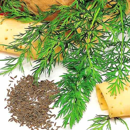 Тмин овощной Радужный изображение 1 артикул 65050