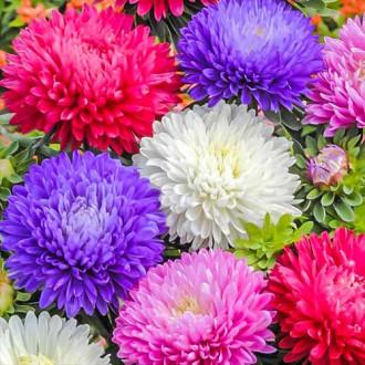 Астра Баллон разноцветный, смесь окрасок изображение 2