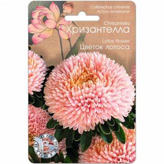 Астра Хризантелла Цветок лотоса изображение 8